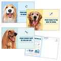 Pet Grooming Service - Postcard Design