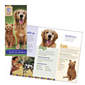 Dog Kennel & Pet Day Care - Brochure Template Design