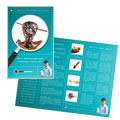 Pest Control Services - Brochure Template Design