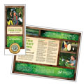 Tree Service - Tri Fold Brochure Template Design