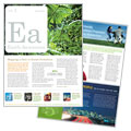 Environmental & Agricultural Non Profit - Newsletter Template Design