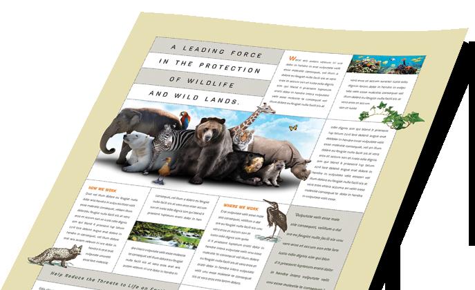 Animals & Pet Care Marketing - Brochures, Flyers, Postcards