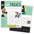 Veterinarian Newsletter Design